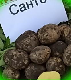 Купить семена Премиум иностранные производители Семена