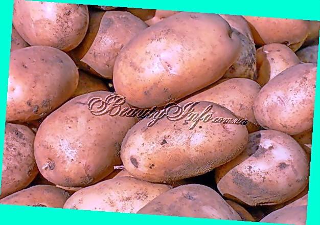сорта картофеля фото и описание журавинка